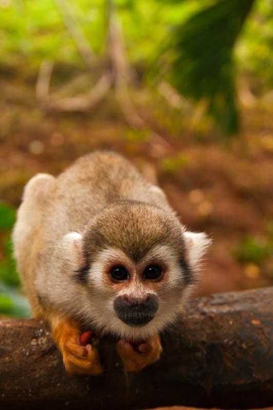 Cestovanie po Dominikánskej Republike Monkey Jungle