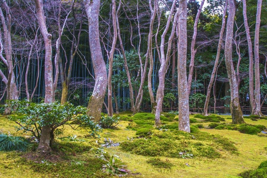 Cestovanie po Japonsku Kyoto
