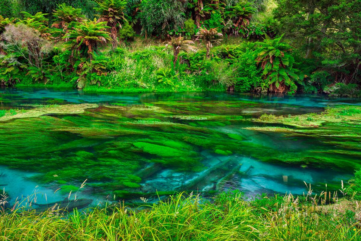 Nový Zéland Putaruru Blue Springs